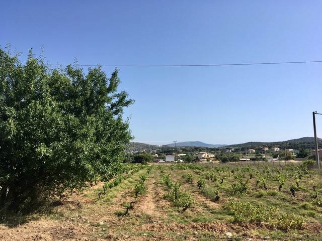 (For Rent) Land Plot || East Attica/Spata - 5.500 Sq.m, 350€